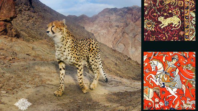 Il ghepardo asiatico